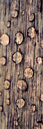 duppels op hout 1p.print