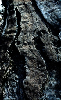 hout3