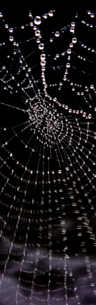 web1p